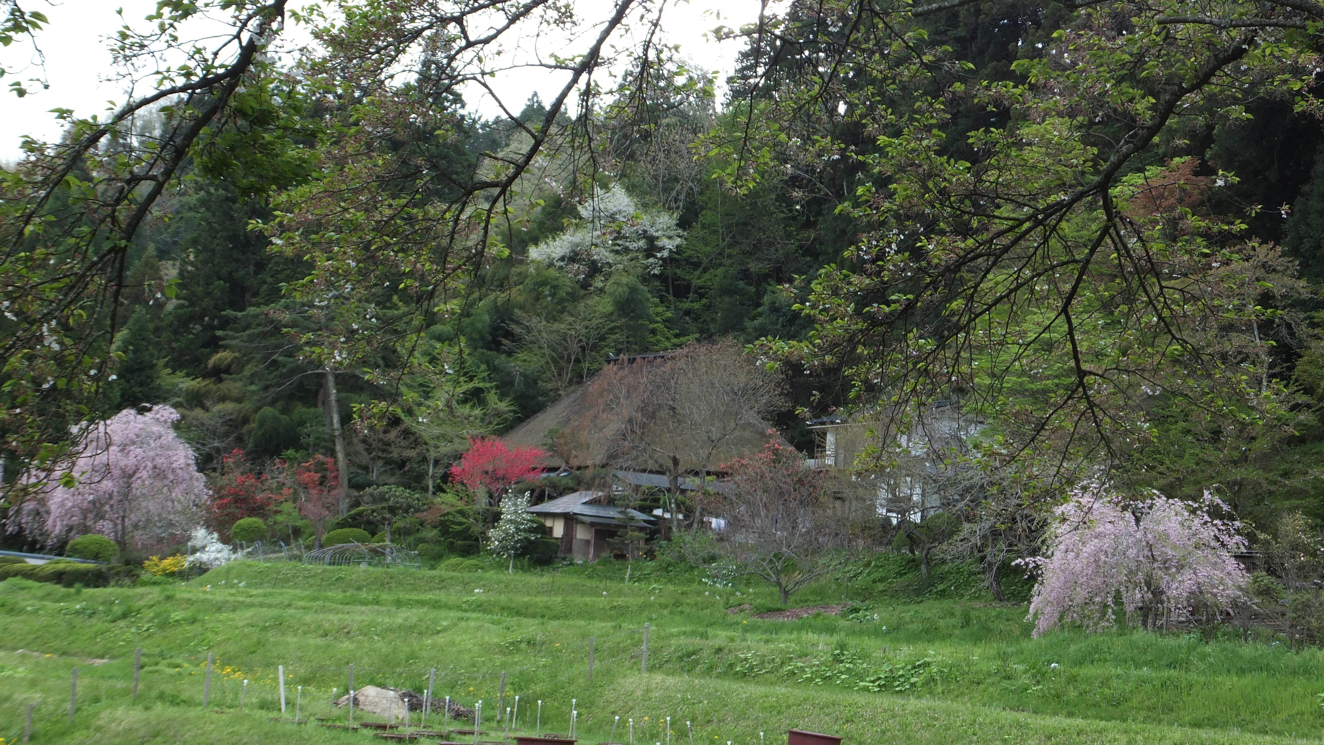 ワイド写真 岩手 里山の春 平泉 Wide Photo Spring In Village